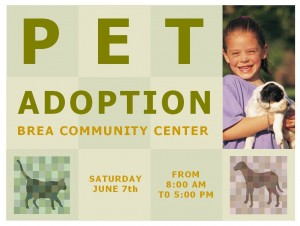 Screenshot of the Pet Adoption Template